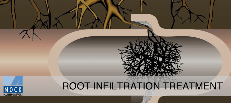 Sugar Land Plumber Mock Plumbing Root Infiltration Treatment